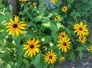 黄色の花.jpg